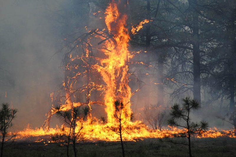 Има ли конспирация зад огромните пожари в Сибир?