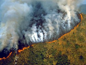 Read more about the article Какво всъщност стои зад пожарите в Амазония?