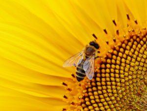 По-строги наказания при отравяне на пчели?