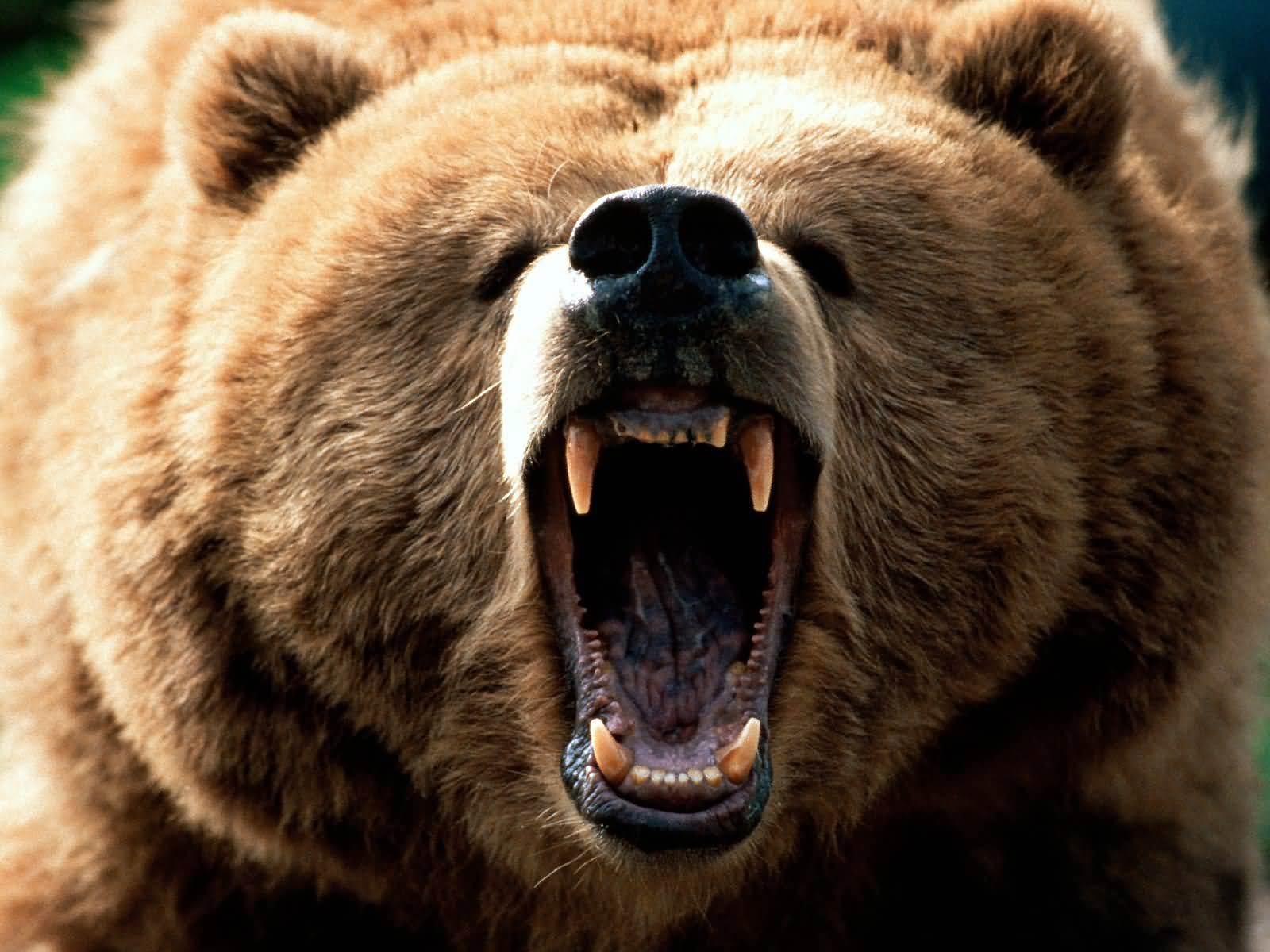 """""""Безсмъртни"""" животни проследиха и убиха ловците си!"""