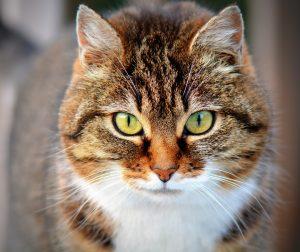 Софийска котка стана герой в мрежата (ВИДЕО)