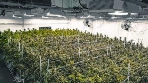 Сръбският президент отива на съд заради плантация с марихуана