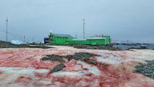 Снегът на Антарктида почервеня (СНИМКИ)