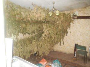 Заловиха над 2000 растения коноп и 20 кг готова за продажба дрога в модерна нарколаборатория в Ямбол (ВИДЕО)