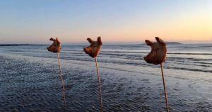 Плаж в Ирландия осъмна със зловеща гледка – набучени на шипове свински глави