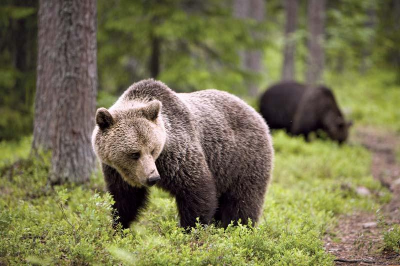 ЗАВРЪЩАНЕ НА ДИВОТО: Застрашена мечка разходи малките се под Рилския манастир (ВИДЕО)