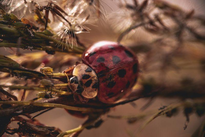 Есенно КЪСМЕТЧЕ в любовта за всяка зодия