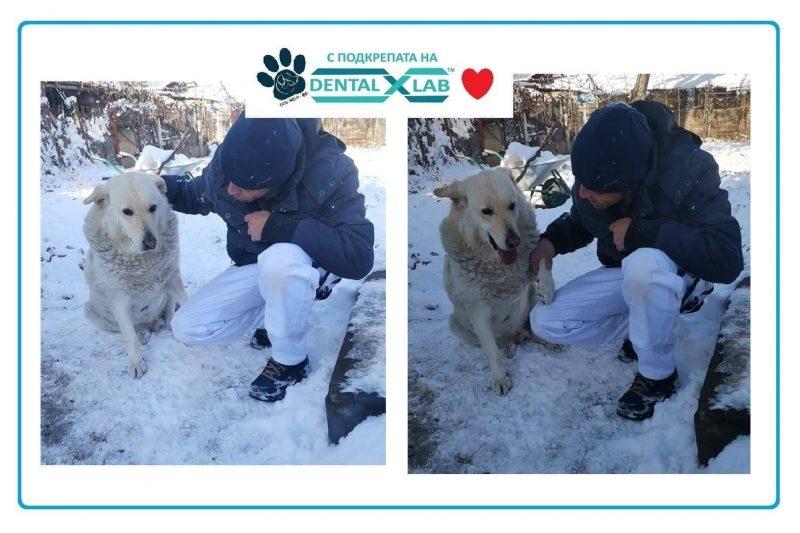 Трагедия с щастлив край: Намушканото куче Белчо намери нов дом