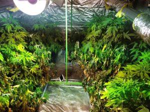 Разкриха модерна наркооранжерия в град Шипка