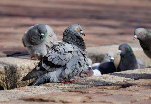 Стотици измрели птици, пожари и разрушения – щетите от фойерверките по света (ВИДЕО)