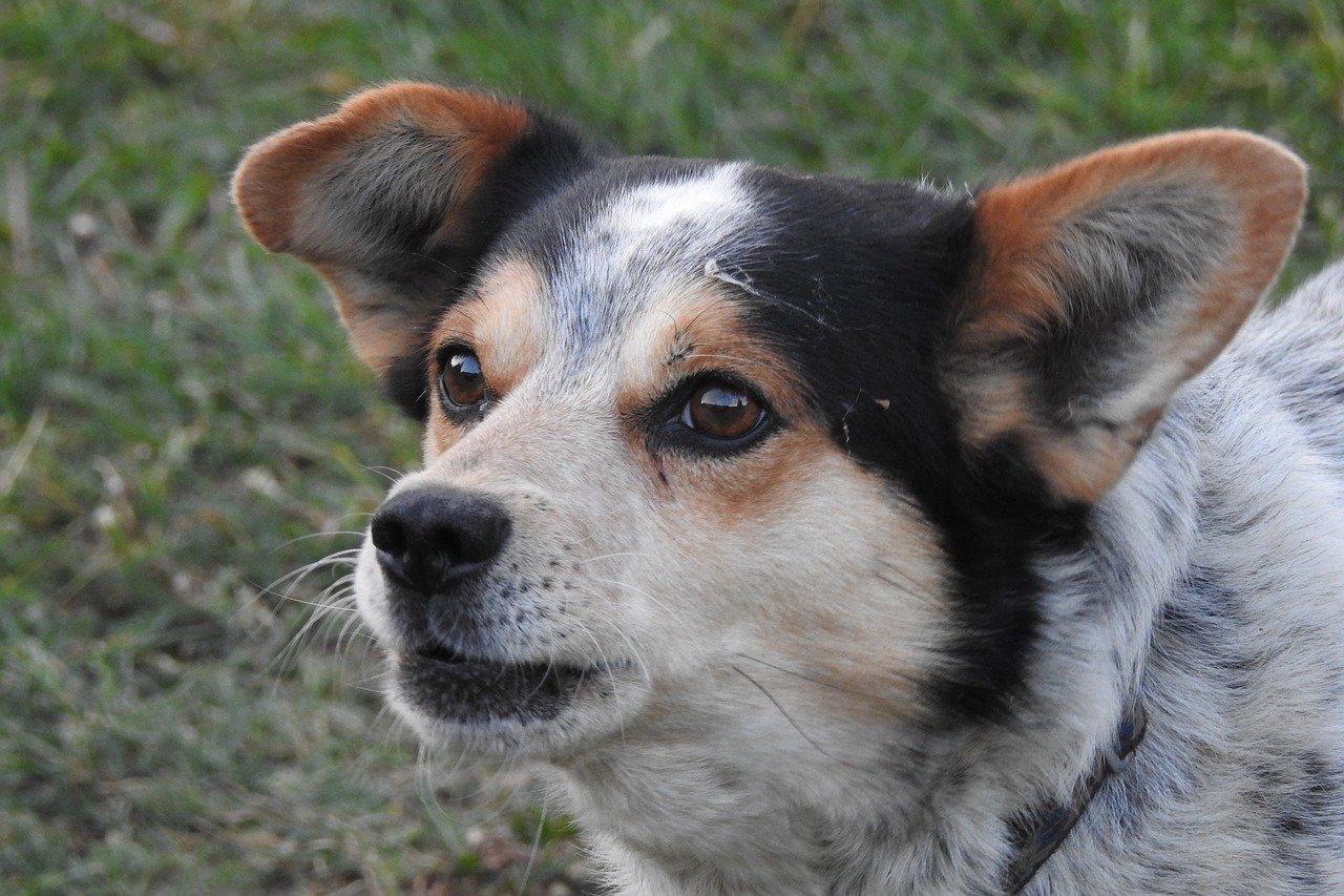 You are currently viewing Бездомно куче нападна 10-годишно дете в близост до столичен парк