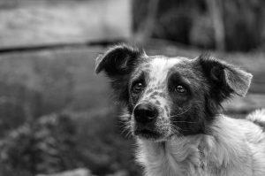 Откриха сини кучета край фалирал химически завод в Русия (СНИМКИ)