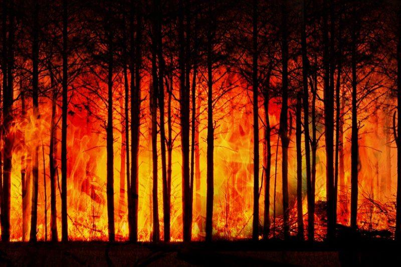 Хиляди декари борова гора пламнаха в Свиленградско, военни се включват в гасенето